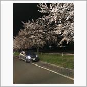 気分が🤔とりあえず夜桜🌸