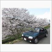 Sakura Trip in 2020  2020/4/4