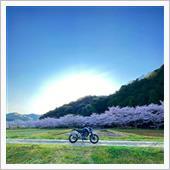 2020年 桜とKTM