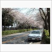 【蔵出し】桜+カレン