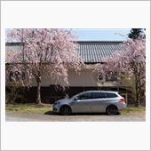 伸びやかなキャラクターラインとしだれ桜