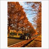 秋のメタセコイア並木