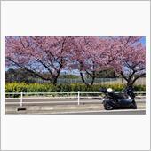 桜と菜の花とバイク