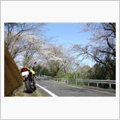 桜 2021🌸山賊編