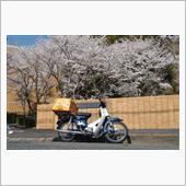 桜2021🌸青カブ編