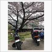 桜満開‧˚₊*̥(∗︎*⁰͈꒨⁰͈)‧˚₊*̥