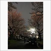 2021 夜桜。