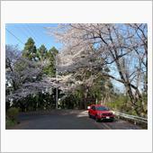 近所の散策(春)