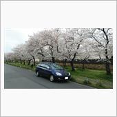 桜🌸2021