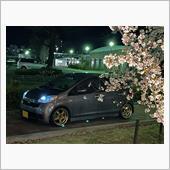 夜桜コラボ