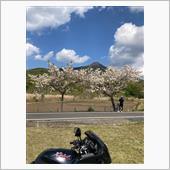 筑波山と桜🌸