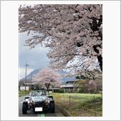 桜の散る前に...桜の下で。