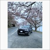 海津大崎の桜を見に行って来ました。