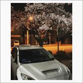 ライトアップ_夜桜