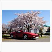 桜と348
