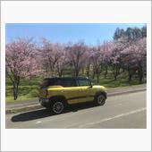 キトウシ公園の桜🌸と