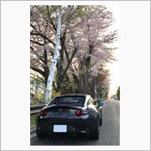 札幌も春🌸