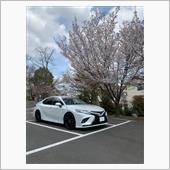 桜とカムリ
