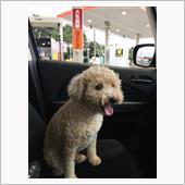 洗車後「愛犬まめ」と給油ドライブ