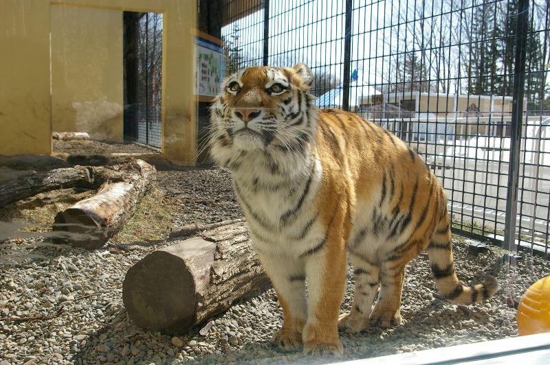 釧路市動物園   おすすめスポット - みんカラ