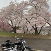 DAYTONA(バイク) スラッシュカットスリップオンマフラー