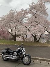 ドラッグスター1100クラシックDAYTONA(バイク) スラッシュカットスリップオンマフラーの単体画像