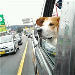 トヨタ ハイラックストラック