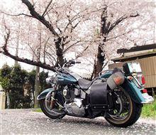 Yoko3さんの愛車:ハーレーダビッドソン ヘリテイジ ソフテイル クラシック