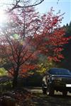 ☆DANさんの愛車:トヨタ ランドクルーザー80