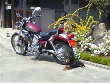 えのんさんのXV Virago 400 (ビラーゴ) メイン画像