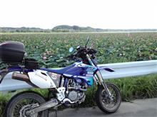 GotoSpeedさんのWR450F メイン画像