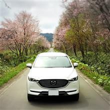 ひできんぐぅさんの愛車:マツダ CX-8