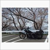 乙コロさんのソフテイル FXS ブラックライン