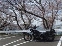 乙コロさんのソフテイル FXS ブラックライン メイン画像