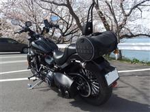 乙コロさんのソフテイル FXS ブラックライン リア画像