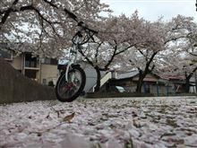 よともさんの折畳自転車 メイン画像