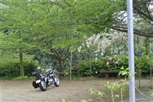 毛利さんのV-TWIN マグナ リア画像