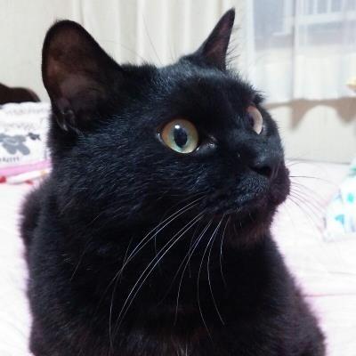 その他 黒猫