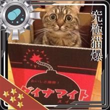 鈴木さん家の多會坊だおさんのラクーン リア画像