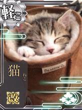 鈴木さん家の多會坊だおさんのラクーン インテリア画像