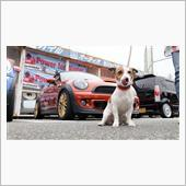 motop3さんのMINI Roadster
