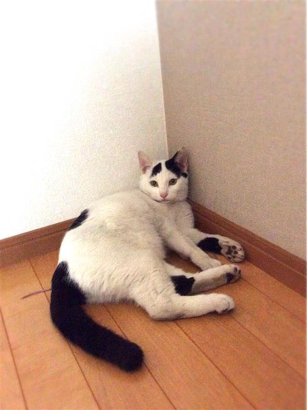 その他 ネコ