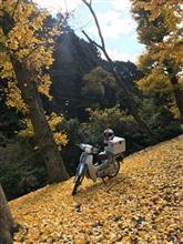 砂くじら(・ω・)さんのスーパーカブ50(AA04型) メイン画像