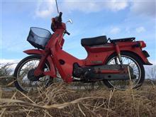 matsumoto16002さんの赤カブ メイン画像