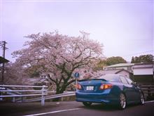 yuki111さんのカローラ リア画像