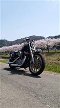 鶴マジェ★さんのスポーツスターXL1200R(ロードスター) メイン画像