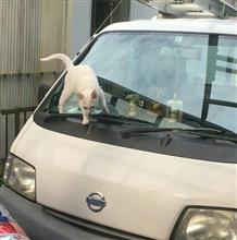 〇猫さんのバネットトラック メイン画像