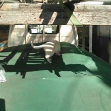 〇猫さんのバネットトラック リア画像