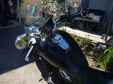 セアさんのXVS1300CU リア画像