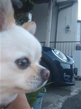 ヶ・ヨンホンさんの愛車:ミニ MINI